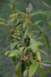 Australian Herbs & Spices